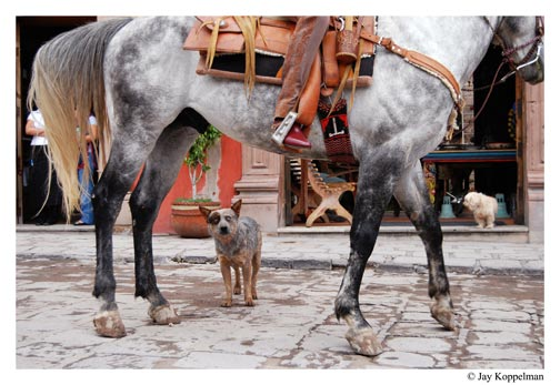 Australian blue heeler dog and horse in San Miguel de Allende, Guanajuato, Mexico, by Jay Koppelman.